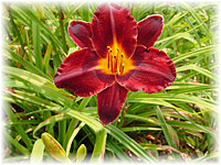 The Daylily Gardens
